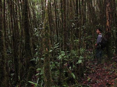 Horský rašelinný les