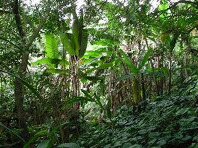 Gunung Salag - horský les 2