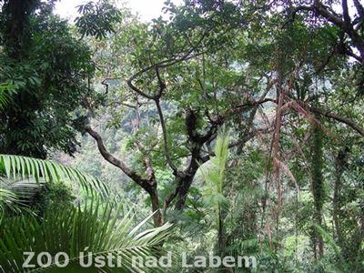 Pohled do korun pralesa