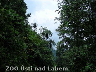 Strmé pralesní svahy