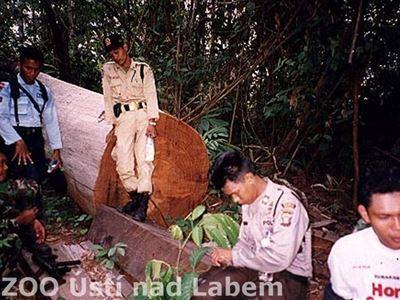 Když se ještě v Sungai Wainu těžilo - 3