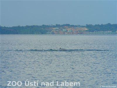 Rozšiřujicí se průmyslová zóna - s delfíny v popředí