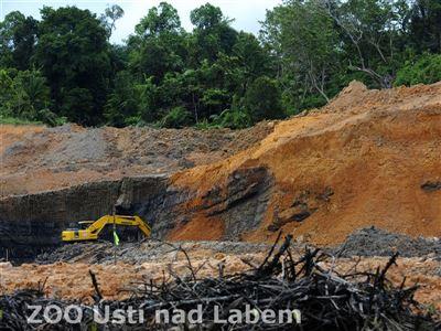 Staveniště továrny na zpracování palmového oleje společnosti Wilmar z roku 2008  (foto Petr Slavík)
