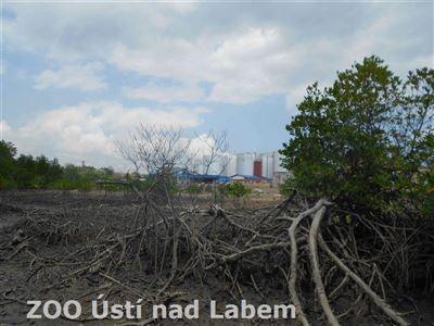 Překladiště palmového oleje firmy Wilmar v balikpapanském zálivu