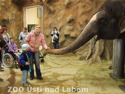 Návštěva u slonů