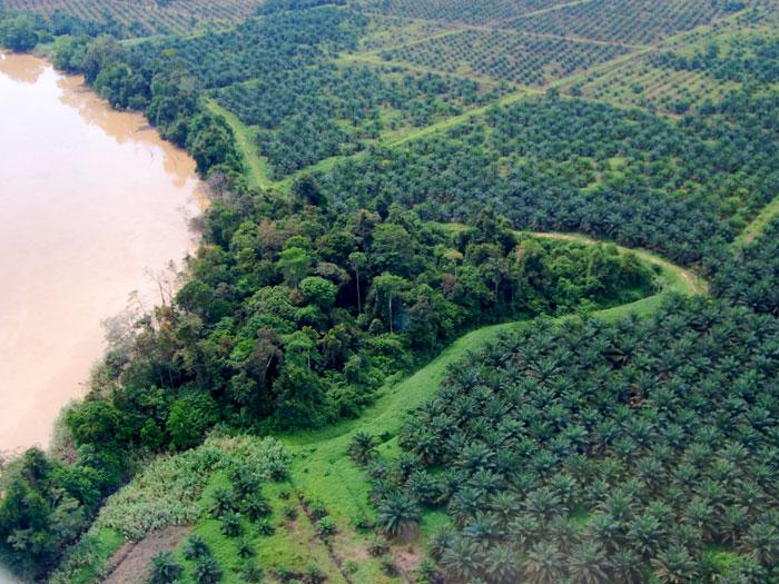 rainforest destruction essay
